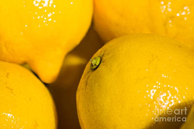Sour Photograph - Lemons by Jorgo Photography - Wall Art Gallery