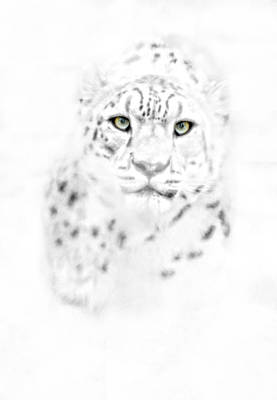 Photograph - Leopard Eyes by Emily Stauring