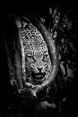 Leopard Wall Art - Photograph - 'leopard's Lair' by John Moulds