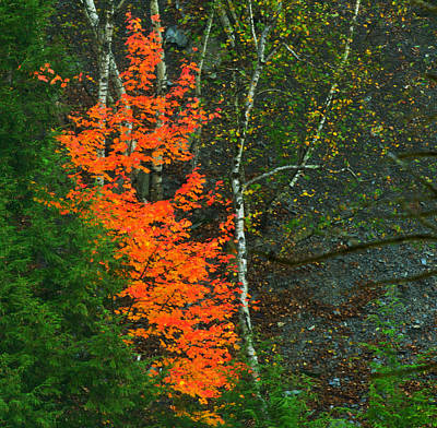 Photograph - Letchworth State Park by Walt Sterneman
