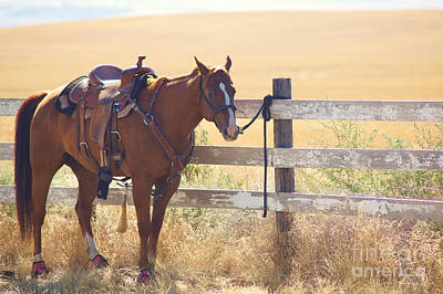 Photograph - Let's Ride by Angi Parks
