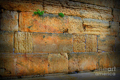Photograph - Peace At The Western Wall by Doc Braham