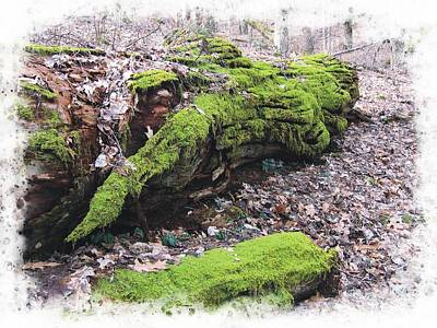 Photograph - Lichen Logs by Joe Duket