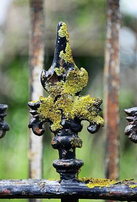 Wrought Iron Fence Photograph - Lichen On Iron Railings In Clean Air by Cordelia Molloy