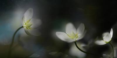 Macro Flower Photograph - Light In The Darkness by Heidi Westum