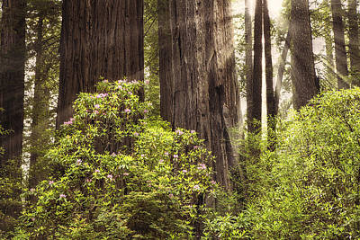 Redwood National Park Photograph - Light In The Woods by Andrew Soundarajan