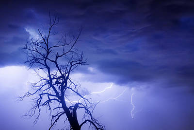 Lightning Tree Silhouette 29 Art Print by James BO  Insogna