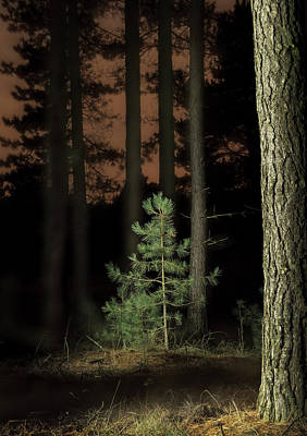Small Forest. Beauty Photograph - Lightpainting The Pine Forest New Growth by Dirk Ercken
