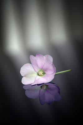 Photograph - Lilac by Brad Grove