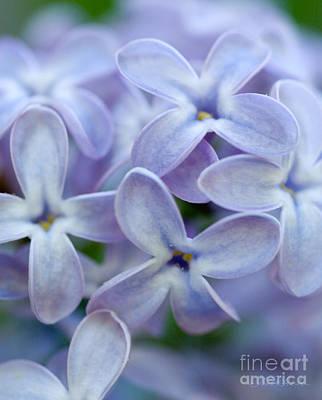 Lilac Macro Art Print by Iris Richardson