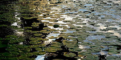 Photograph - Lilly Pad Abstraction by Wendell Lowe