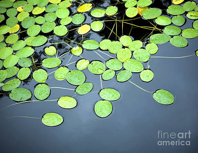 Lilies Royalty-Free and Rights-Managed Images - Lilly Pad Pond by Tim Hester