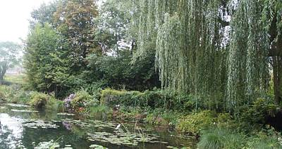 Photograph - Lilly Pond  by Kristine Bogdanovich