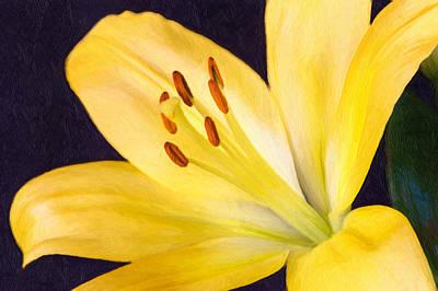 Lily  Art Print by Garvin Hunter