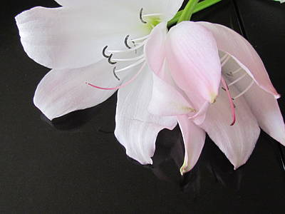 Photograph - Lily  by Joyce Woodhouse