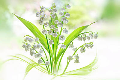 Bokeh Photograph - Lily Of The Valley by Jacky Parker