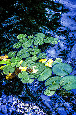 Lilies Photos - Lily pads by Elena Elisseeva