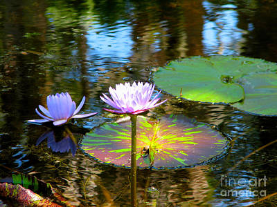 Photograph - Lily Pond by Anita Lewis
