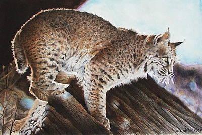 Linns Valley Bobcat Art Print by Ric Ricards