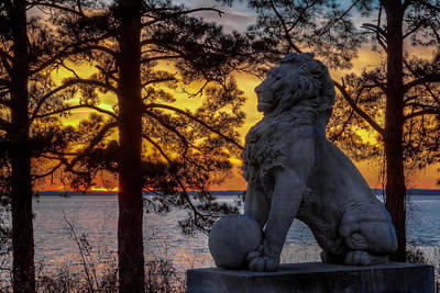 Lion At Sunset Art Print