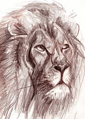 Sahara Drawing - Lion by Ian Keith Murray