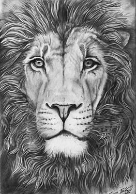 Lion Portrait Original