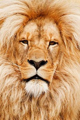 Lion Portrait Art Print by Tilen Hrovatic