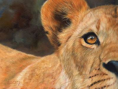 Feline Painting - Lioness by David Stribbling