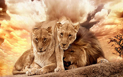 Photograph - Lions by Christine Sponchia