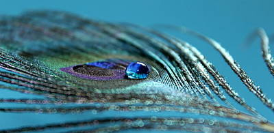 Peacock Photograph - Liquid Blue by Krissy Katsimbras