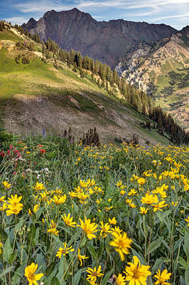Photograph - Little Cottonwood Canyon Near Alta Utah by Utah Images