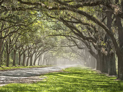 Photograph - Live Oak Allee by Sandra Anderson