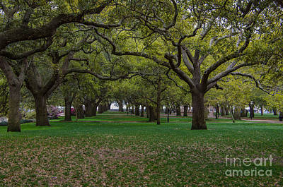 Photograph - Live Oaks by Dale Powell