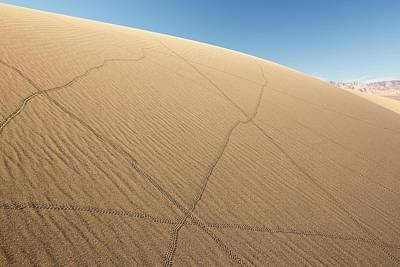 Dry Lake Photograph - Lizard Trails On Mesquite Flat Sand Dunes by Ashley Cooper