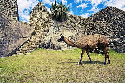 Photograph - Llamas At Machu Picchu by Alexey Stiop