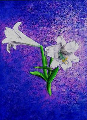 Drawing - Lockharts  Lillies by Karen Buford