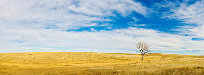 Lone Hackberry Tree In Autumn Plains Art Print by Panoramic Images