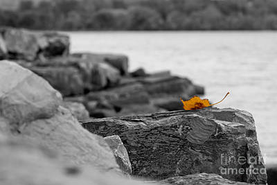 Photograph - Lone Leaf by Brad Marzolf Photography
