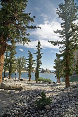 American Beauty Photograph - Lone Pine Lake Shoreline by Jim West