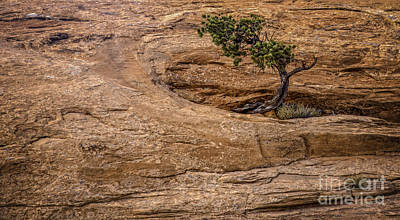 Photograph - Lone Tree by David Waldrop