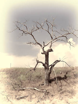 Photograph - Lone Tree by HW Kateley