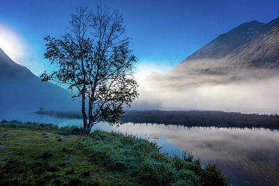 Single Object Photograph - Lone Tree With Morning Fog Seen On Tern by Panoramic Images