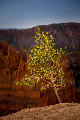 Photograph - Lonely Aspen by Dwight Theall