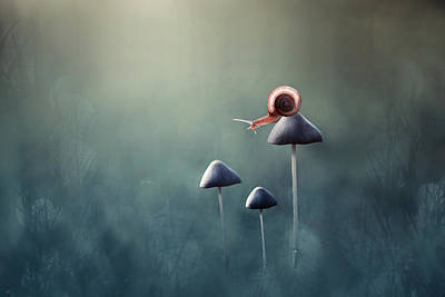 Mushrooms Wall Art - Photograph - Lonely by Edy Pamungkas