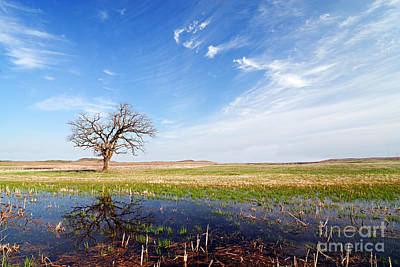 Photograph - Lonely Tree by Larry Ricker