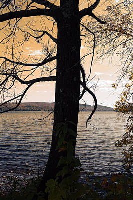 Lonely Tree   Art Print by Mark Ashkenazi