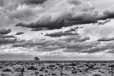 Lonesome Tree Bw Art Print by Alan Tonnesen