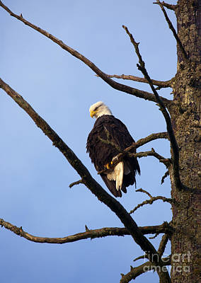 Eagle Photograph - Looking Down On The World by Mike  Dawson