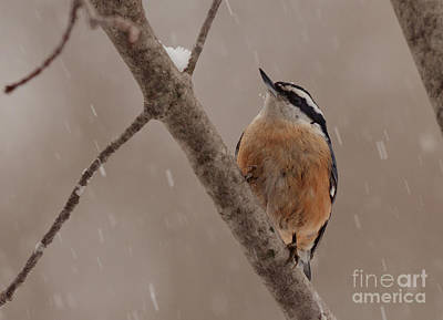 Winter Scene. Winter Landscape. Snow Landscape. Black And White. Birds Photograph - Looking Up by Cheryl Baxter