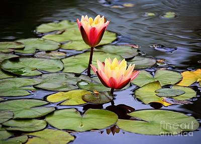 Photograph - Lotus by Lisa L Silva